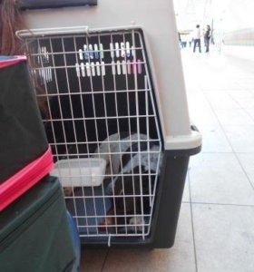 Клетка новая для авиаперевозки крупных собак