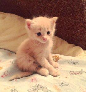 Котята