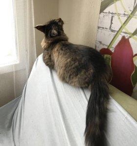 Стрижка/вычесывание (груминг)  котов и кошек