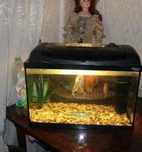 Продам аквариум на 20л