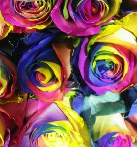 Роза Радуга 70см