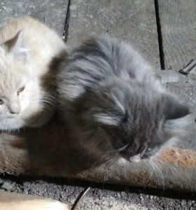 2 милейших котёнка в добрые руки
