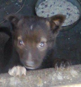щенок девочка 1,5 2 месяца
