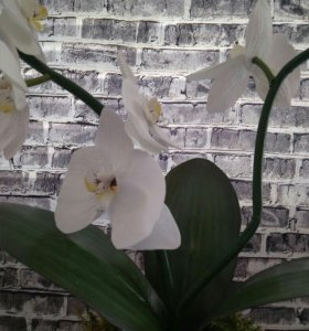 Орхидея  Phalaenopsis из фоамирана
