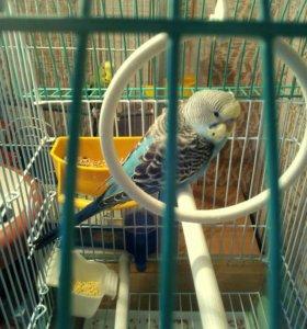 Мальчик - попугайчик