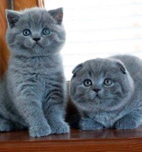 Котики и кошечки