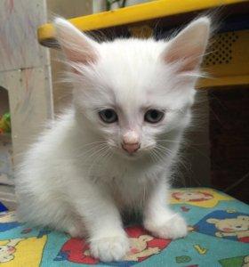 Голубоглазый котёнок!