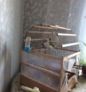 Волнистые попугаи + клетка