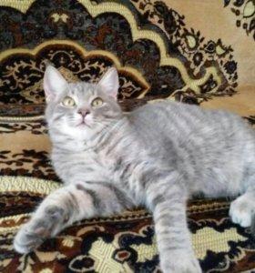 Котенок Василий
