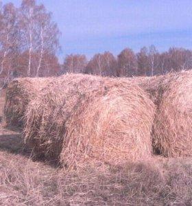 Солома пшеничная, ячменая в мешках с доставкой.
