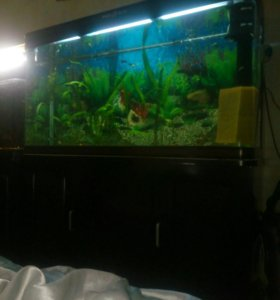 ,аквариум