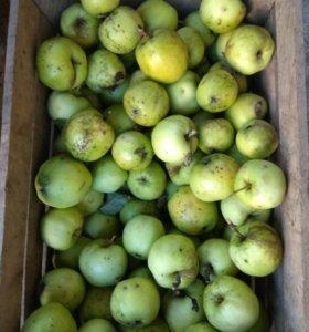 Яблочек ведро