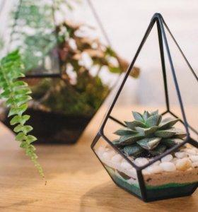 Флорариум геометрический мини-капля