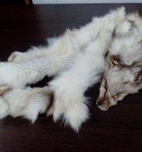 Шкурка лисы