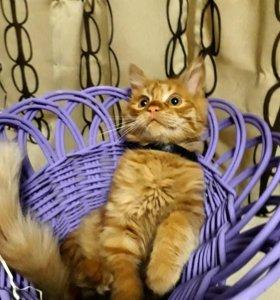 Отдам котёнка.