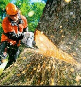 Распил деревьев
