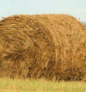 Продам сено в рулонах и стогах