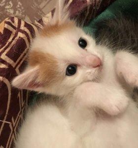 Котёнок ,мальчик