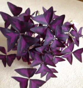 Комнатный цветок в керамическом горшке.