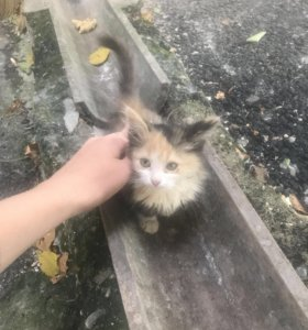 Маленькая кошечка