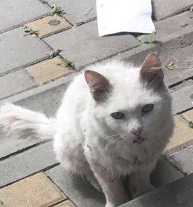 Белый кот в добрые руки