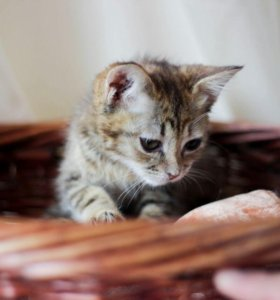 Кошечка Милая