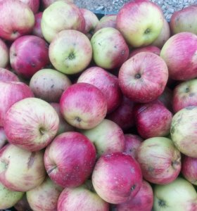 Печорские яблоки