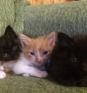Милые котята ищут свой дом )!