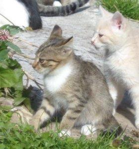 Котята мышеловы