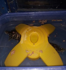 2 водяные черепахи