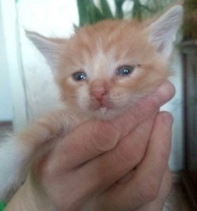 Котята в добрые и ответственные руки