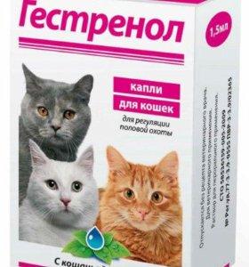 Антисекс для кошачих