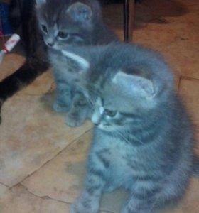 Котята девочки.