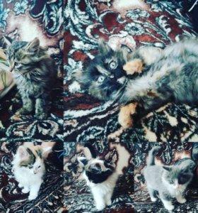 Отдам котиков в добрые руки)))