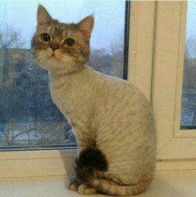 Стрижка кошек,выезд на дом!