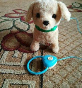 Детская игрушка собачка на поводке