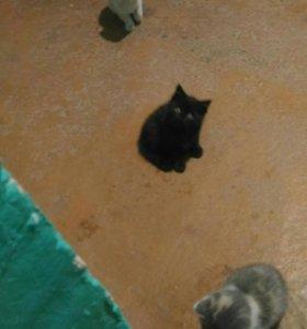 Котята и мама-кошка ищут дом!!