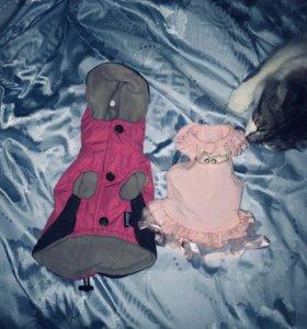 Плащик и платье , на собаку.