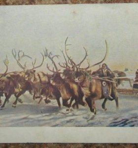 Открытка Традиционные гонки оленьих упряжек