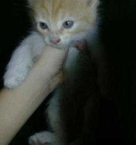 Одаю в хорошие руки котят улица Порковая 15
