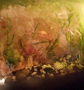 Аквариум с рыбками гуппи
