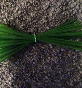 Колбы для цветов (удлинители для орхидей)