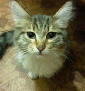Котик 7 месяцев