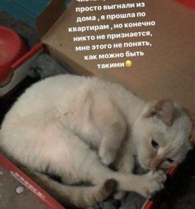 Котик если нужен кому то пишите