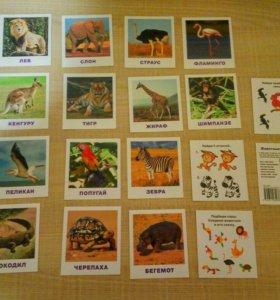 Обучающие карточки Животные жарких стран
