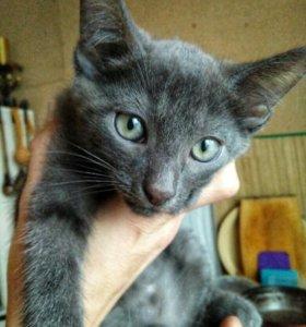 Серый котёнок.