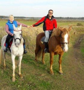 верховая езда , лошади в прокат, конные прогулки