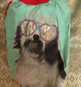 Одежда для маленькой собаки 🐕