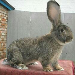 Кролики, мясо кроликов.