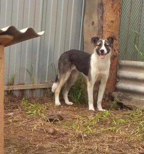 Пёс Кай и собака Герда